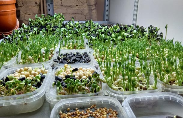 НОУ-ХАУ. Теплицы UrbaniEco установят вмагазинах «Город-сад», сотрудники которых будут выращивать зелень напродажу. Фото UrbaniEco